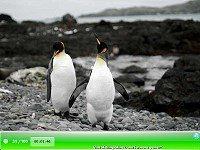SSSG - Penguins