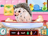 Cute Hedgehog Care